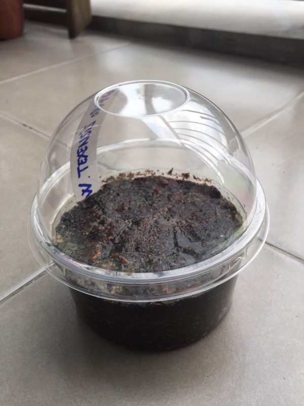 small container for peyote